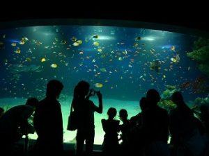 マリホ水族館の年間パスポートはお得?展示は?現地調査リポート!