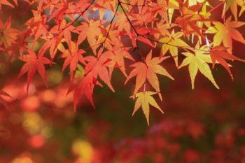 紅葉をライトアップで楽しめるおすすめスポット