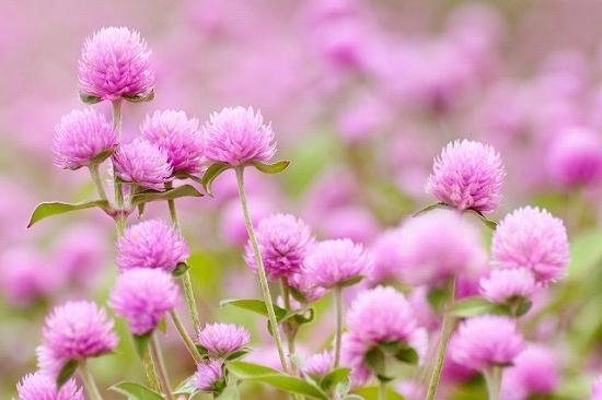 敬老の日のプレゼントに花を長生きの花言葉を持つ種類おすすめ3つ!